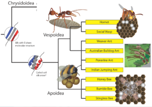 Chart showing protein types and insect species