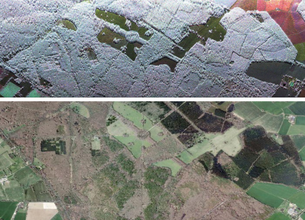 SAR vs optical image over forest