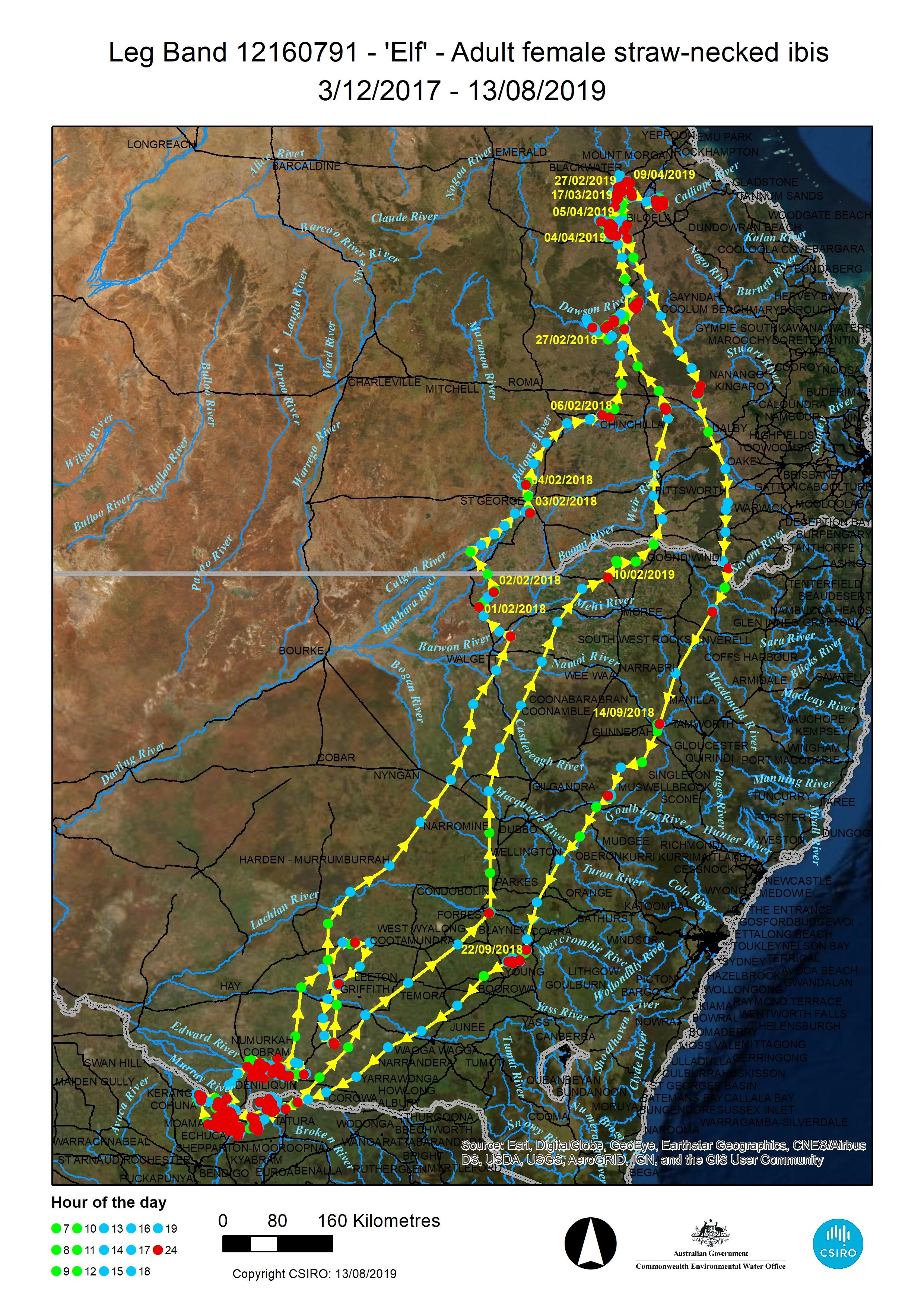Satellite tracking - Waterbird breeding & movements