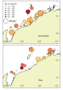 Species richness and biomass at each site sampled in November 2013 and May 2014. The size of the circle corresponds to relative abundance of macroalgae.