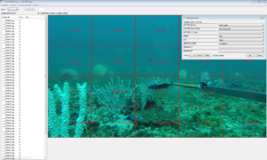 Classifying habitat from video using CATAMI codes and TransectMeasure (www.seagis.com.au)