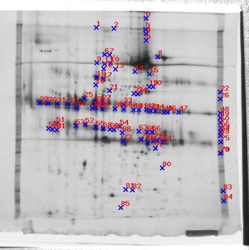 Detected spots 1