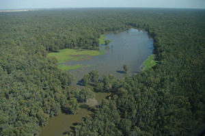 Hut Lake, Barmah Forest, River Murray, southern Australia (photo copyright Keith Ward)
