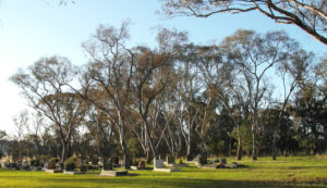 Grassy woodlands have high cultural, spiritual and sense-of-place values. Hall Cemetery, Australian Capital Territory (photo: Matt Colloff)