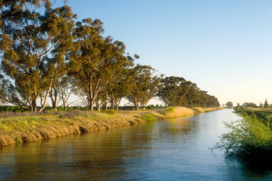A eucalypt lined irrigation channel