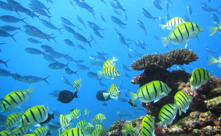 Fish swimming around an underwater reef