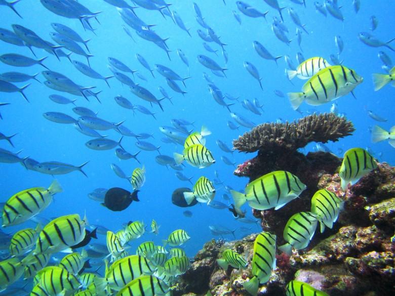 Fish swimming around an underwater reef
