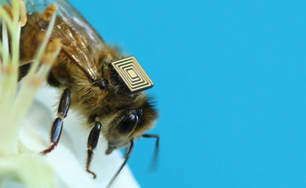 A bee with a microchip on its back