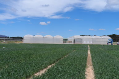 Greenhouses in a field of crops.