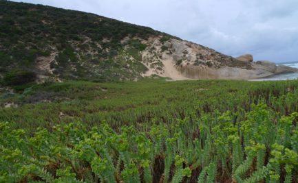 E In Dunes Snd With PlantsPlant