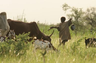 Fula herders with their cattle, sheep and goats.