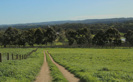 Farmland in the Adelaide Hills