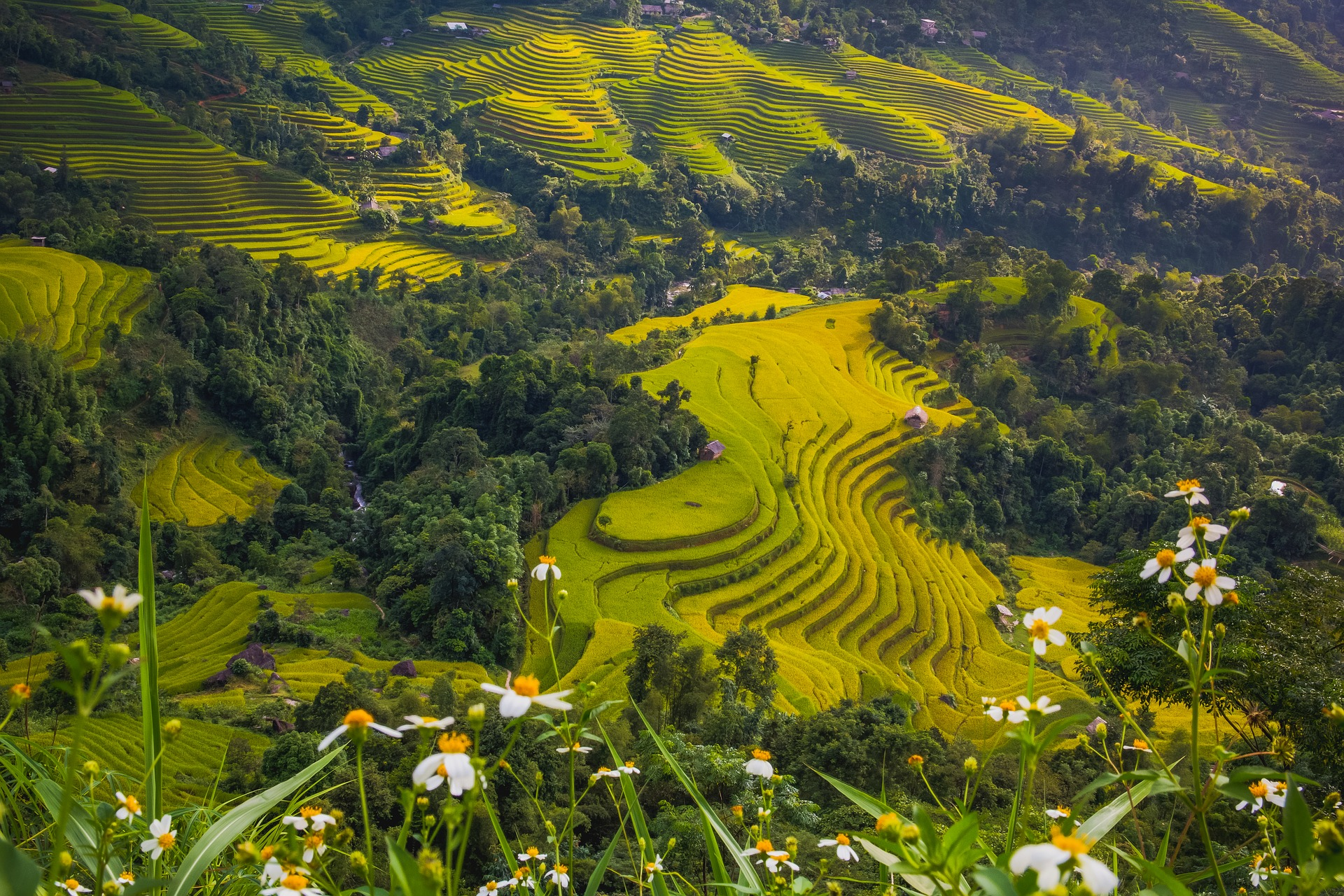 Terraced rice paddies at the side of a hill