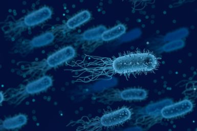 Bacteria swimming