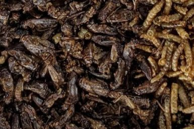Crickets and mealworms